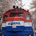 Top 19 Fun & Family-Friendly  Things to Do in Korea – Cherry Blossom #2