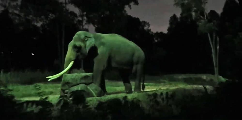 Night Safari Singapore - The elephant Chawang