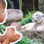 Shvonne meet the animals in Singapore Zoo