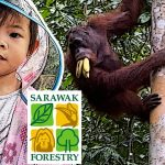 Meet Orangutan at Semenggoh Wildlife Centre