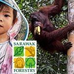 Meet Orangutan at Semenggoh Wildlife Centre