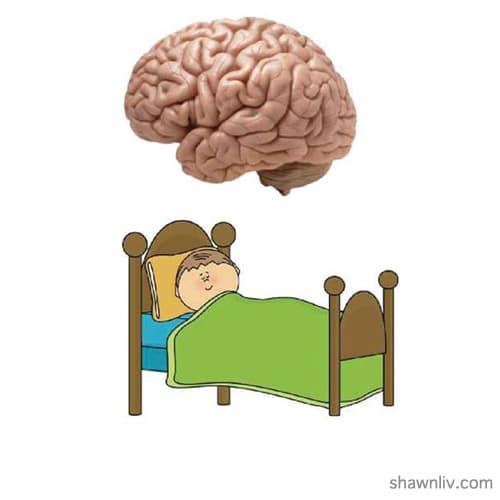 Health Brain